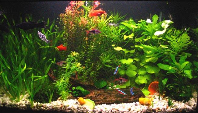 Queres armar un acuario taringa for Peceras con peces