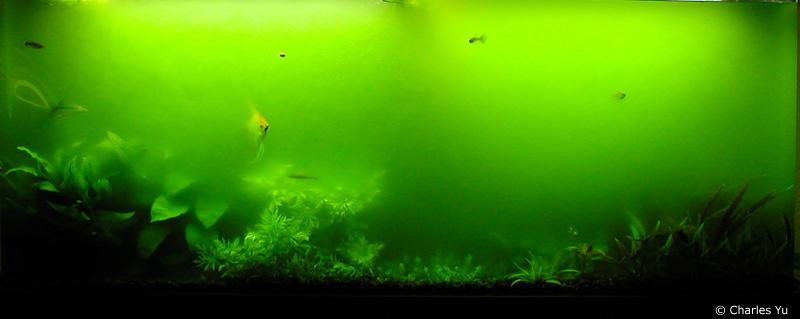 megapost algas en tu acuario (post acuariofilio)