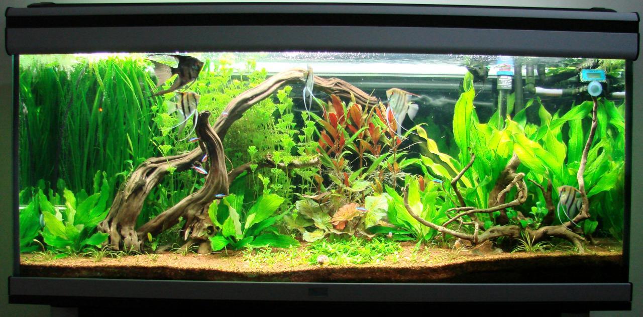 Gu a r pida de tipos de acuarios acuaristas for Clases de peces de acuario