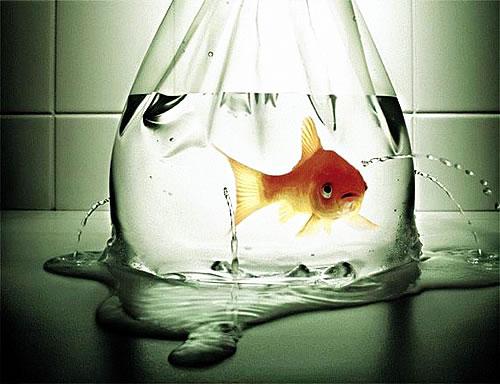 pez_bolsa_agua_agujeros