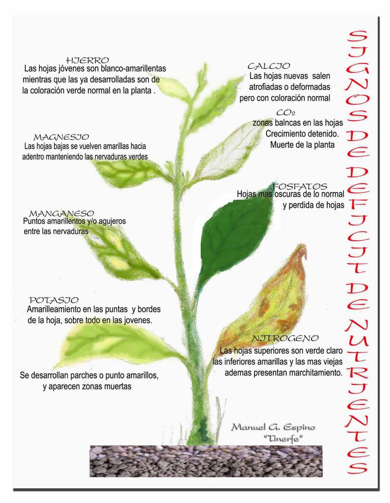 Ayuda para detectar nutrientes que faltan en mis plantas for Potasio para plantas