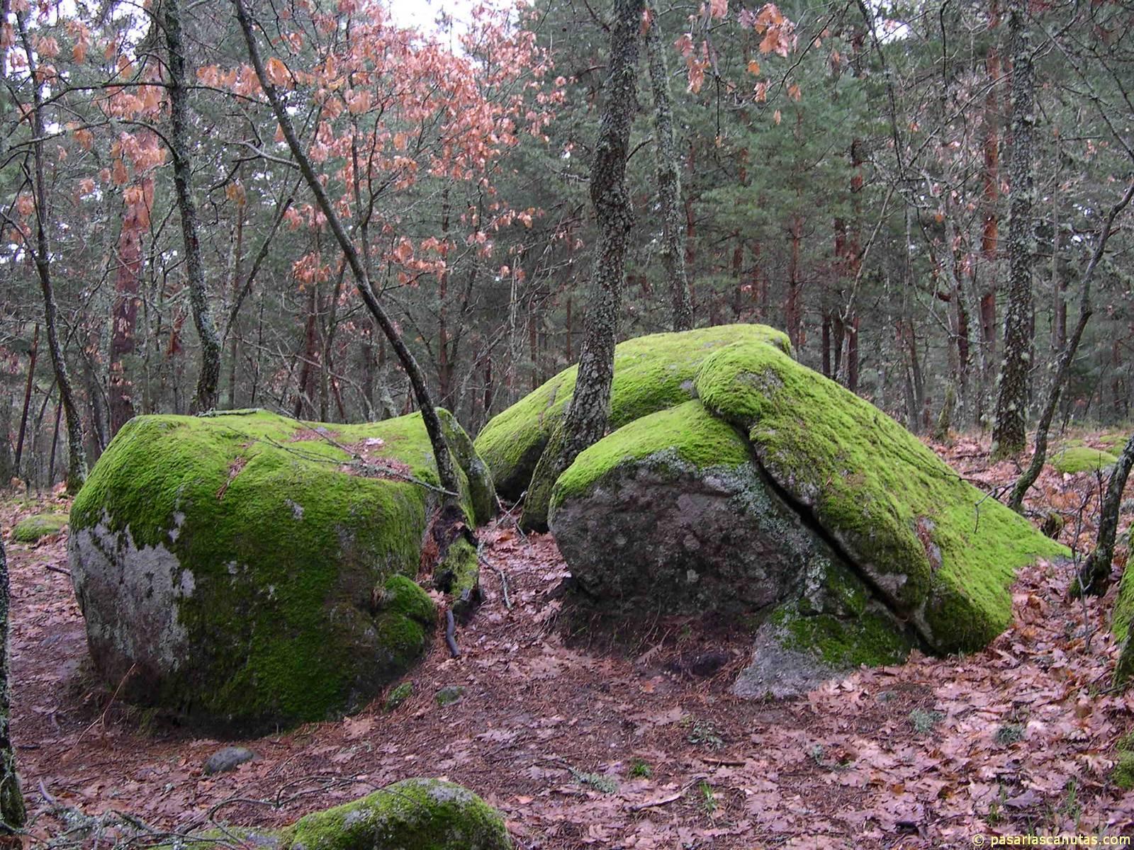 rocas_con_musgo_1600X1200