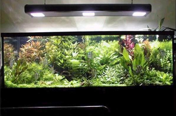 Cortes de luz en el acuario tropical acuaristas for Acuarios baratos