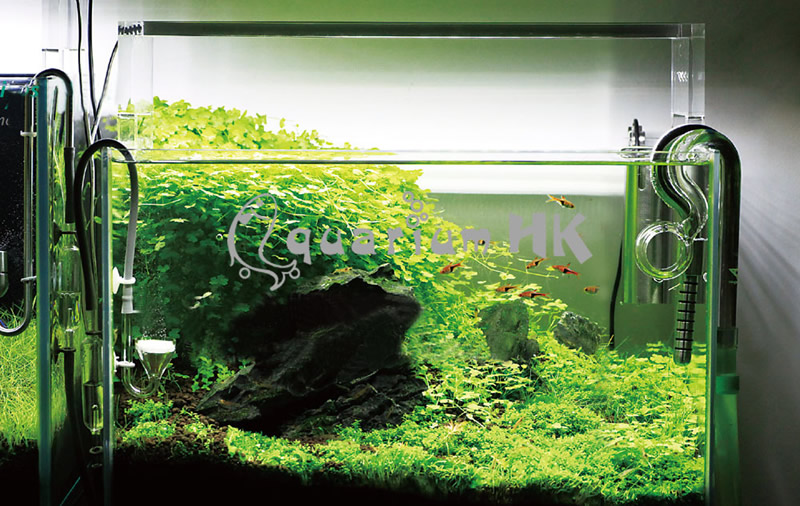 Chihiros-Aquasky-Planted-Aquarium-27W-High-Output-White-Lamp-54-LED-Light-50cm