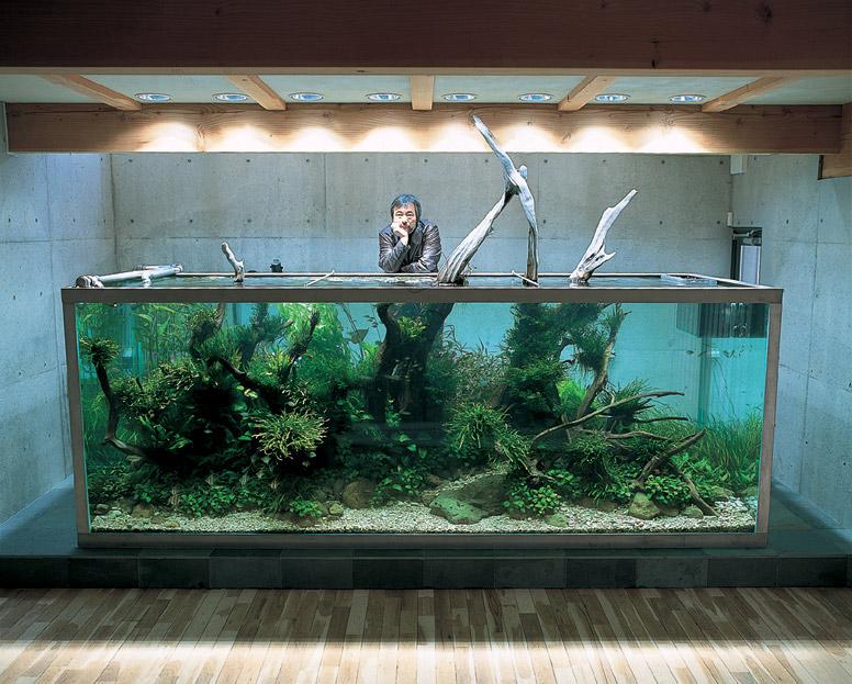 unique-nature-aquarium-by-takashi-amano