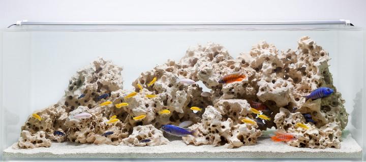 O safado do peixe rola viacutedeo 01 - 5 8