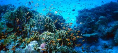 Parametros del Agua del Arrecife