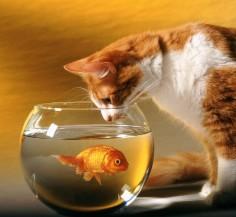 ¿Que es el estrés? y ¿Cuales son los diferentes factores que lo causan en el acuario?