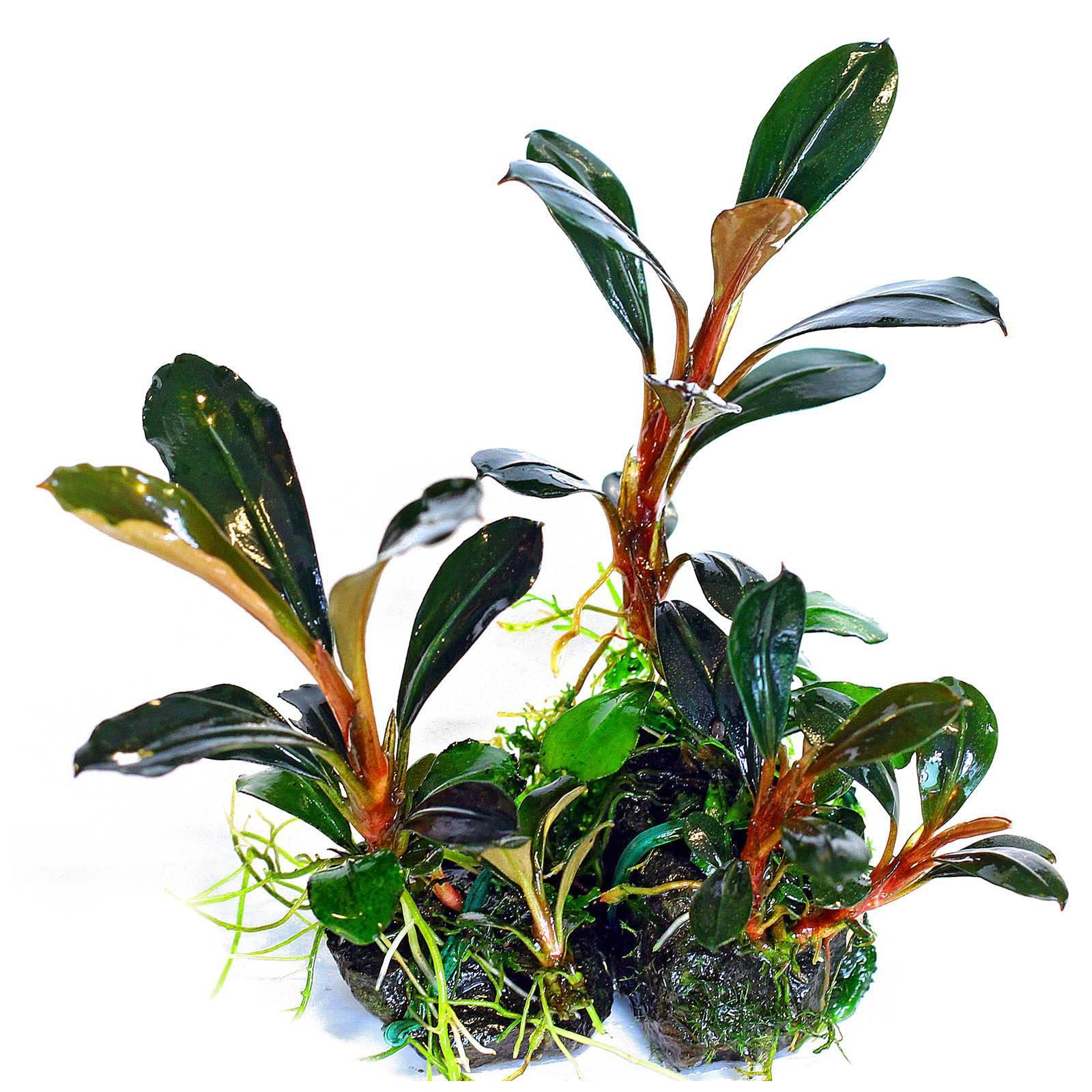 Ayuda para detectar nutrientes que faltan en mis Plantas