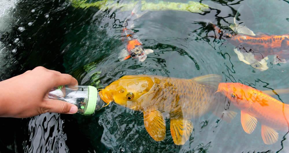 Nutrición para los peces