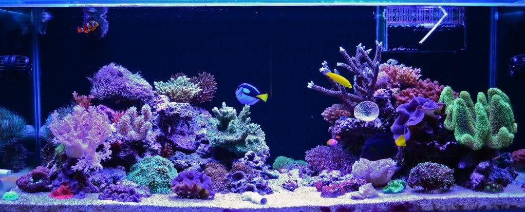 ORP y su impacto en acuario saludable